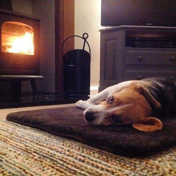 Sheepland Sheepskin Chocolate Pet Bed with dog lying on it, in front of lit fire